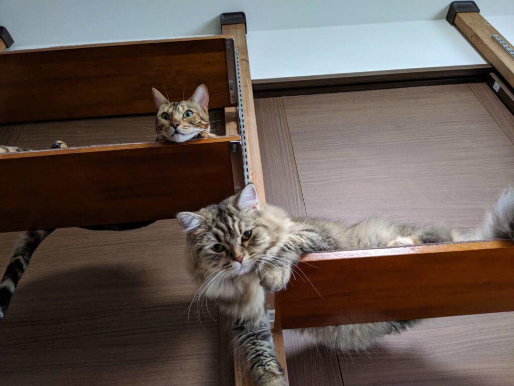 キャットタワーwith猫
