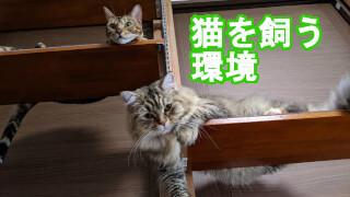 猫を飼う環境