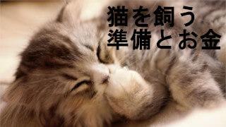猫を飼う準備とお金
