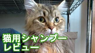 猫用シャンプーレビュー