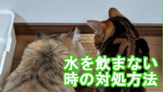 猫が水を飲まない時の対処方法