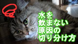 猫が水を飲まない原因の切り分け方