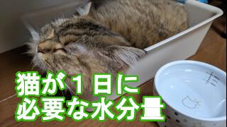 猫が1日に必要な水分量