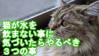 猫が水を飲まない事に気づいたらやるべき3つの事